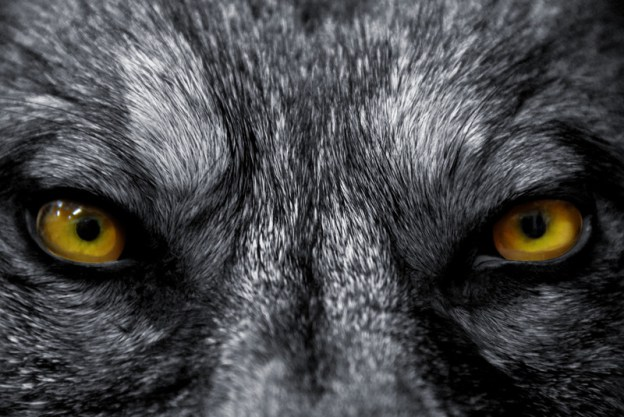 Lupus - a cry of the wolf